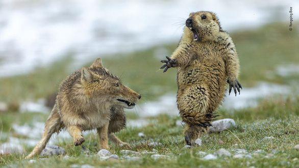 best-wildlife-photos-1-15712928656021400280422.jpg